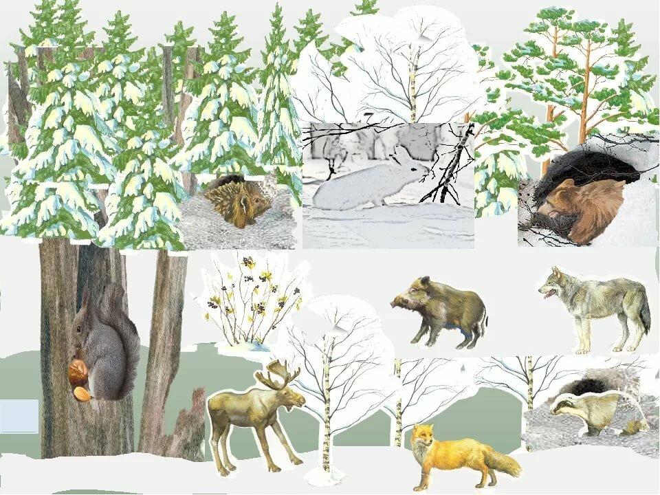 где зимуют дикие животные картинки предлагаем