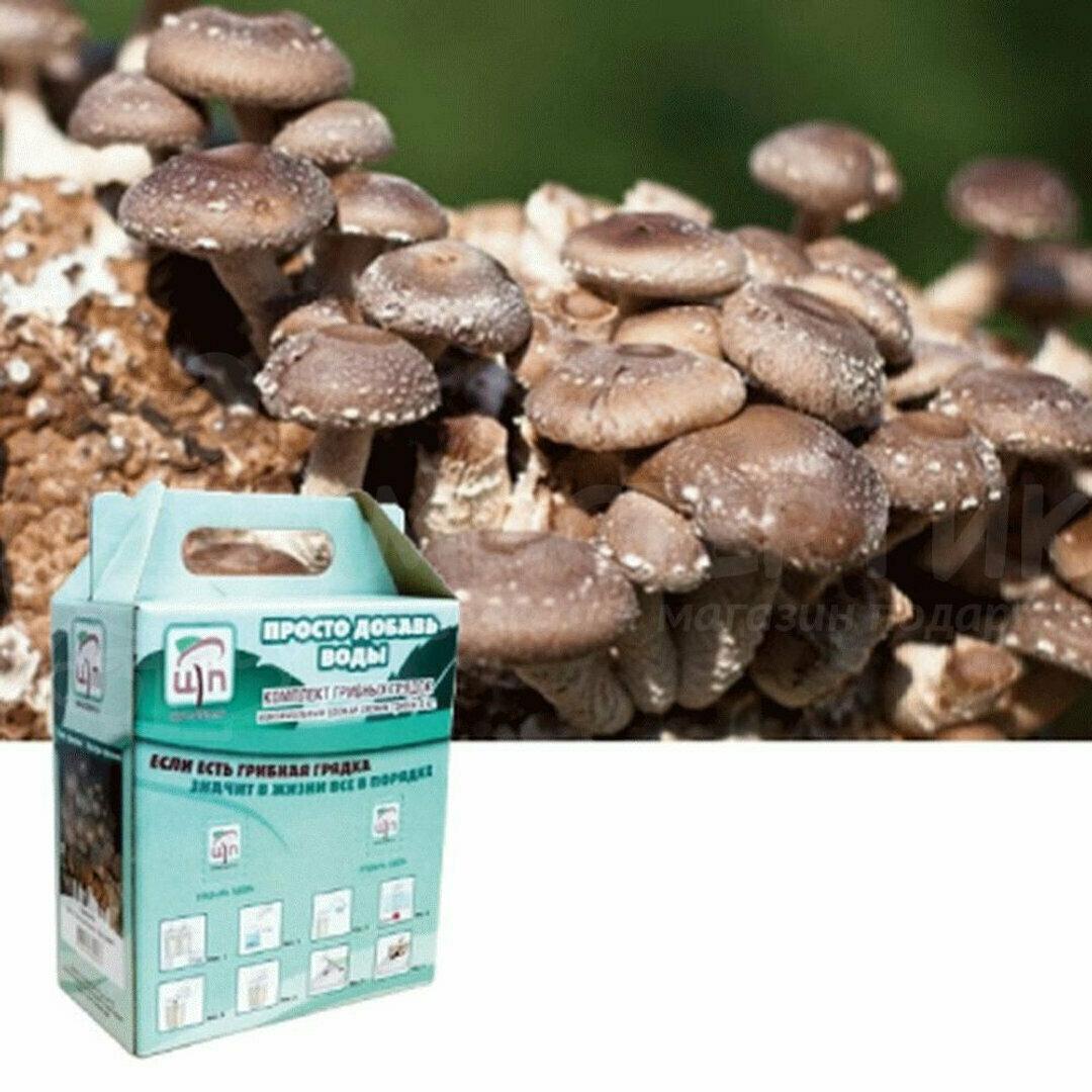 Набор для выращивания грибов Домашняя Грибница в Данилове