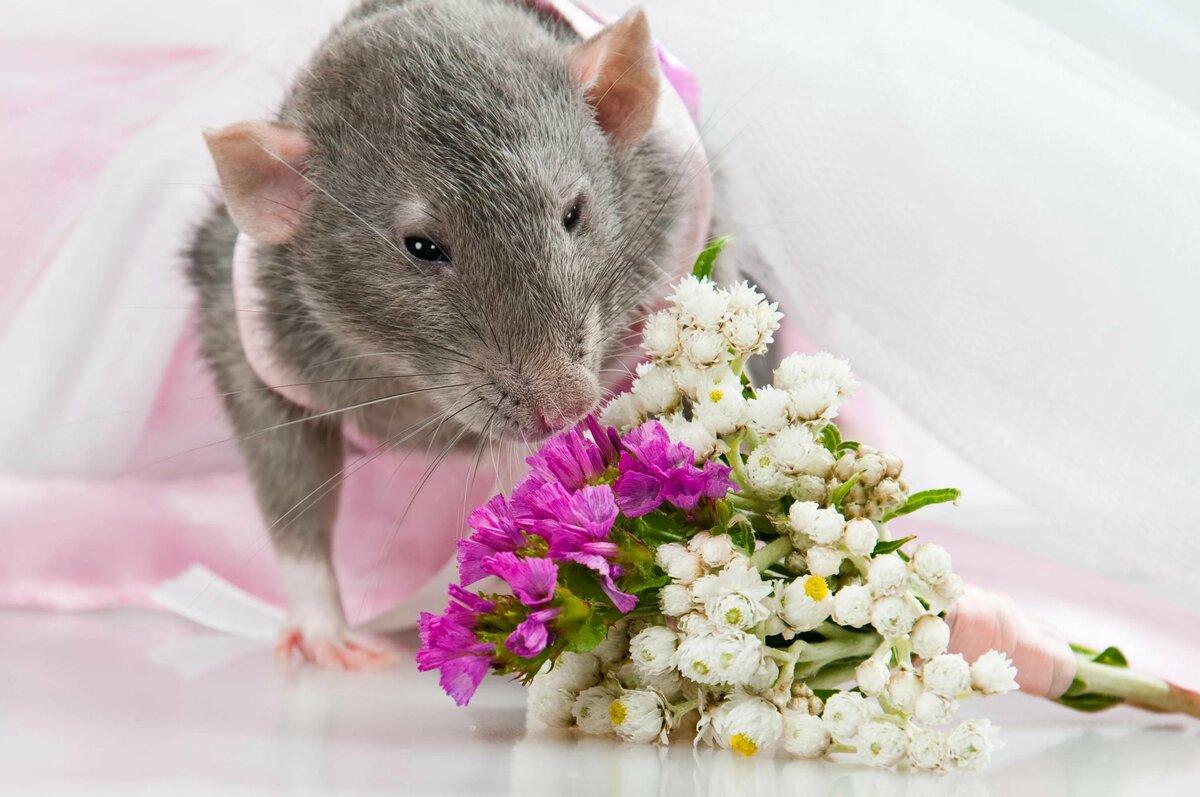картинка красивого мышонка молодости она занималась