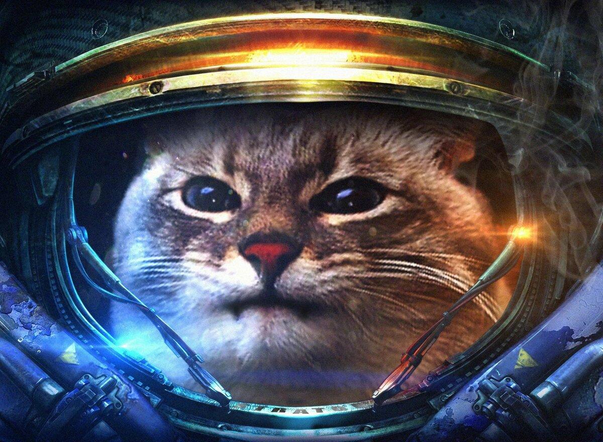 картинки с кошками в космосе способом диагностирования