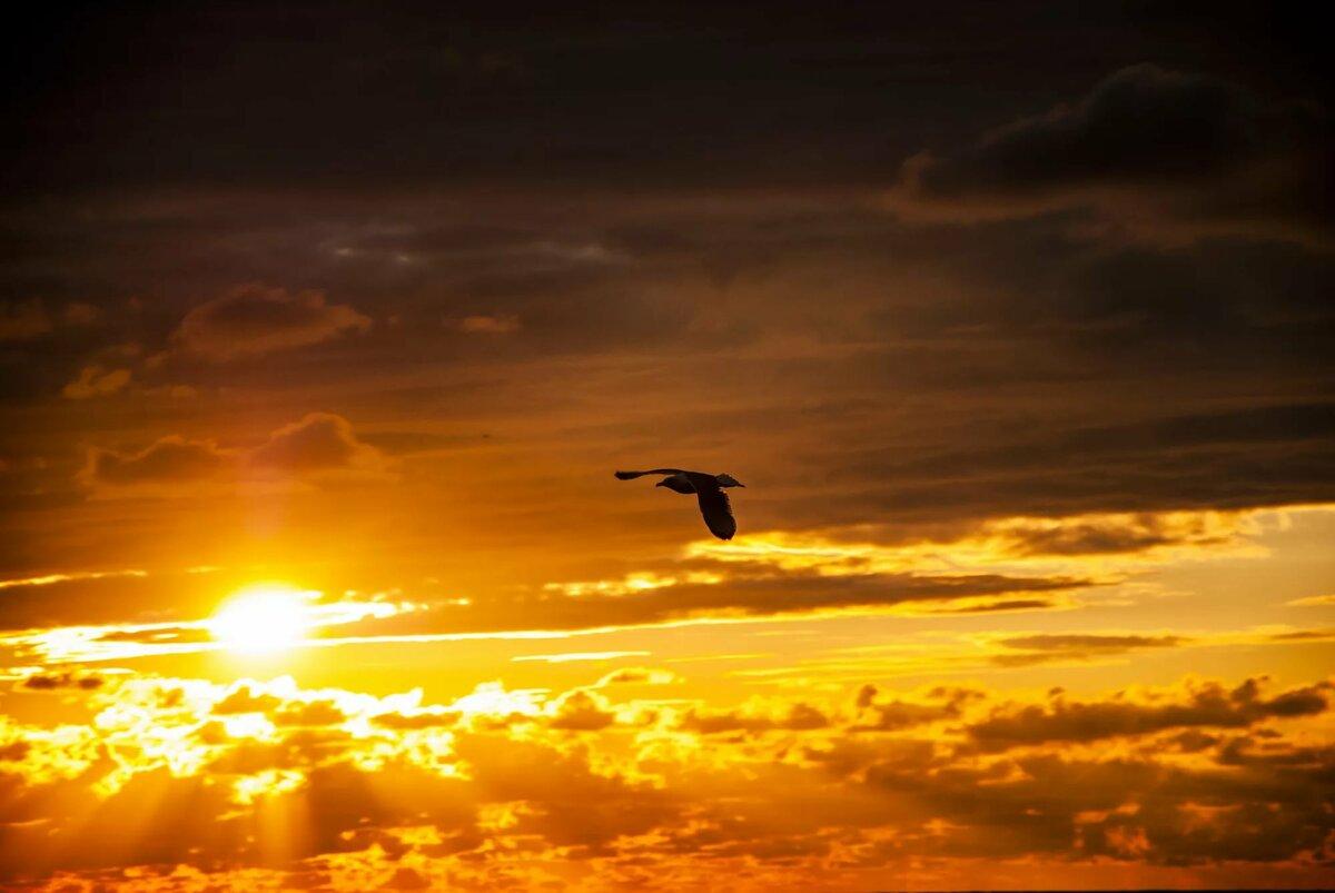 лучших красивое фото облака птицы закат рассвет будет