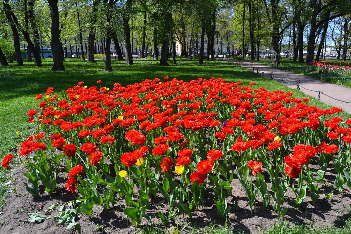 Александровский сад цветы оптом, букет невесты
