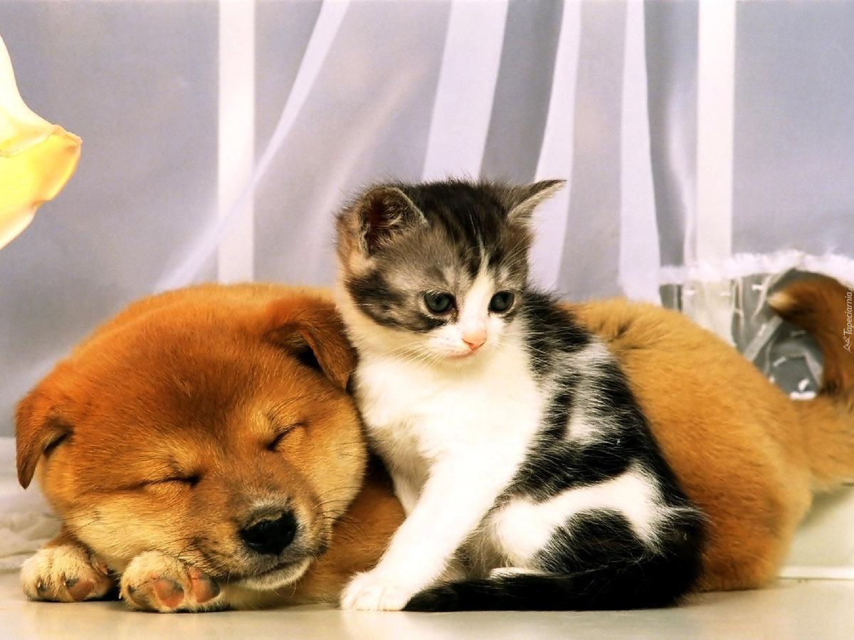 Смешные картинки щенят и котят, одноклассники сообщения открытку
