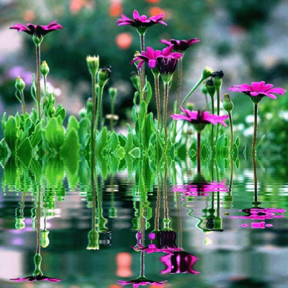 Цветы в картинках с анимацией