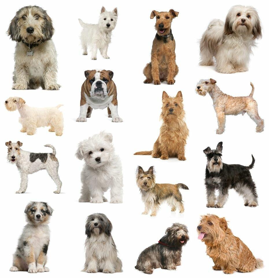 Картинка всех собак с именами