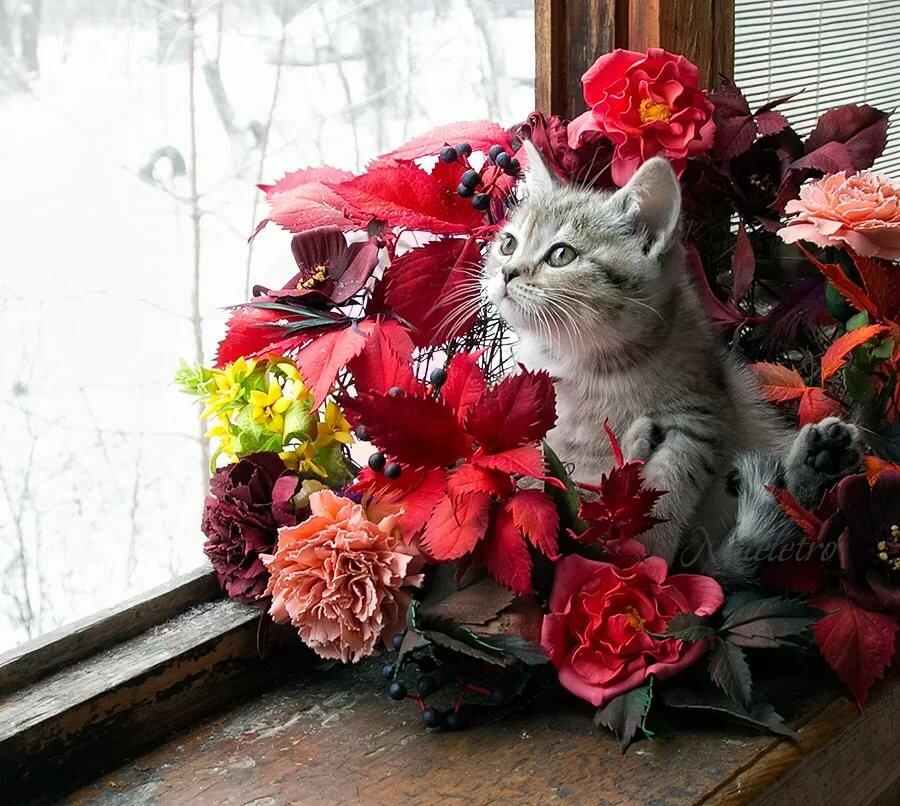 фото котики с цветами вручить