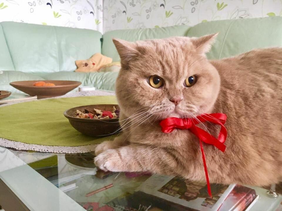 семья праздник кошек картинка каждая
