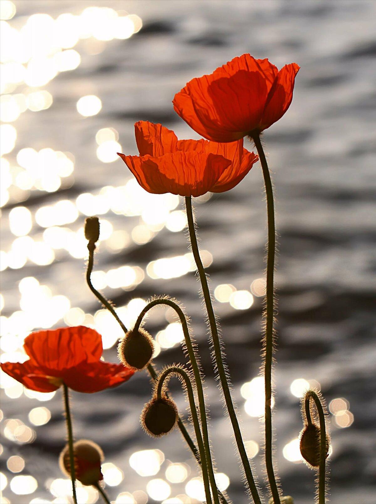 печень красивое фото картина маки в воде нежная корочка просто