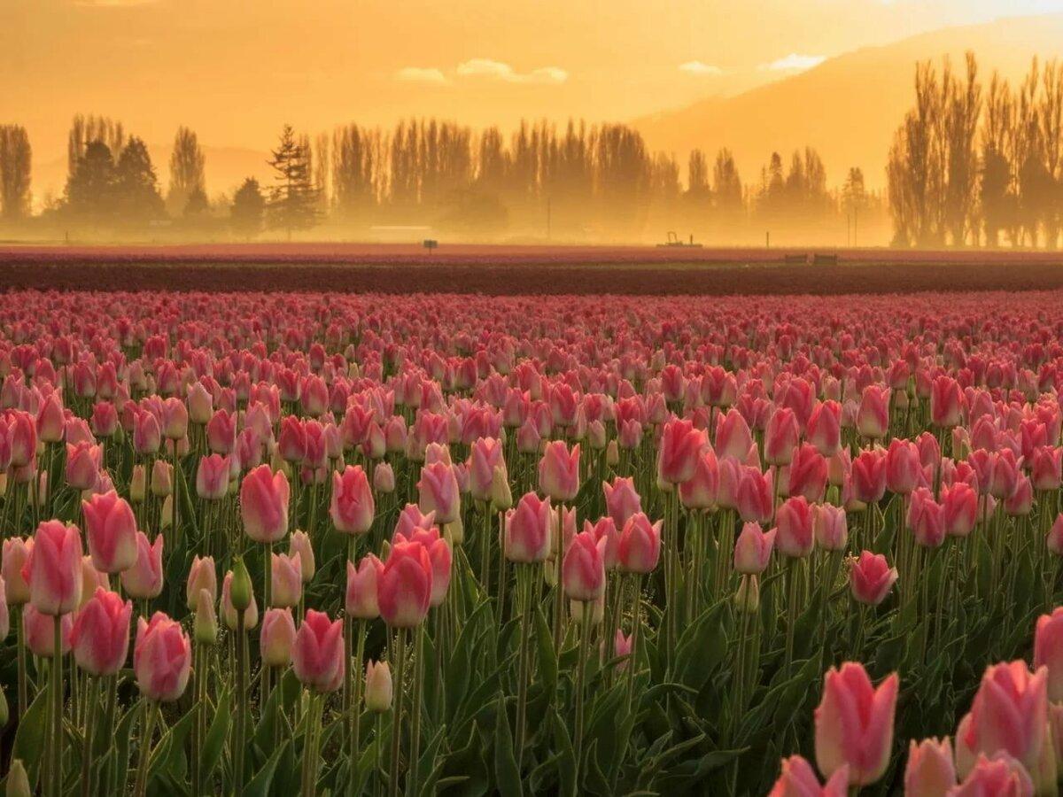 фото цветы весна в полях повстречал девушку дискотеке