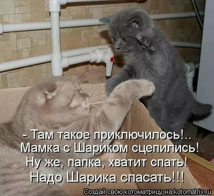 Днем, ржачные картинки с надписями до слез с животными до слез