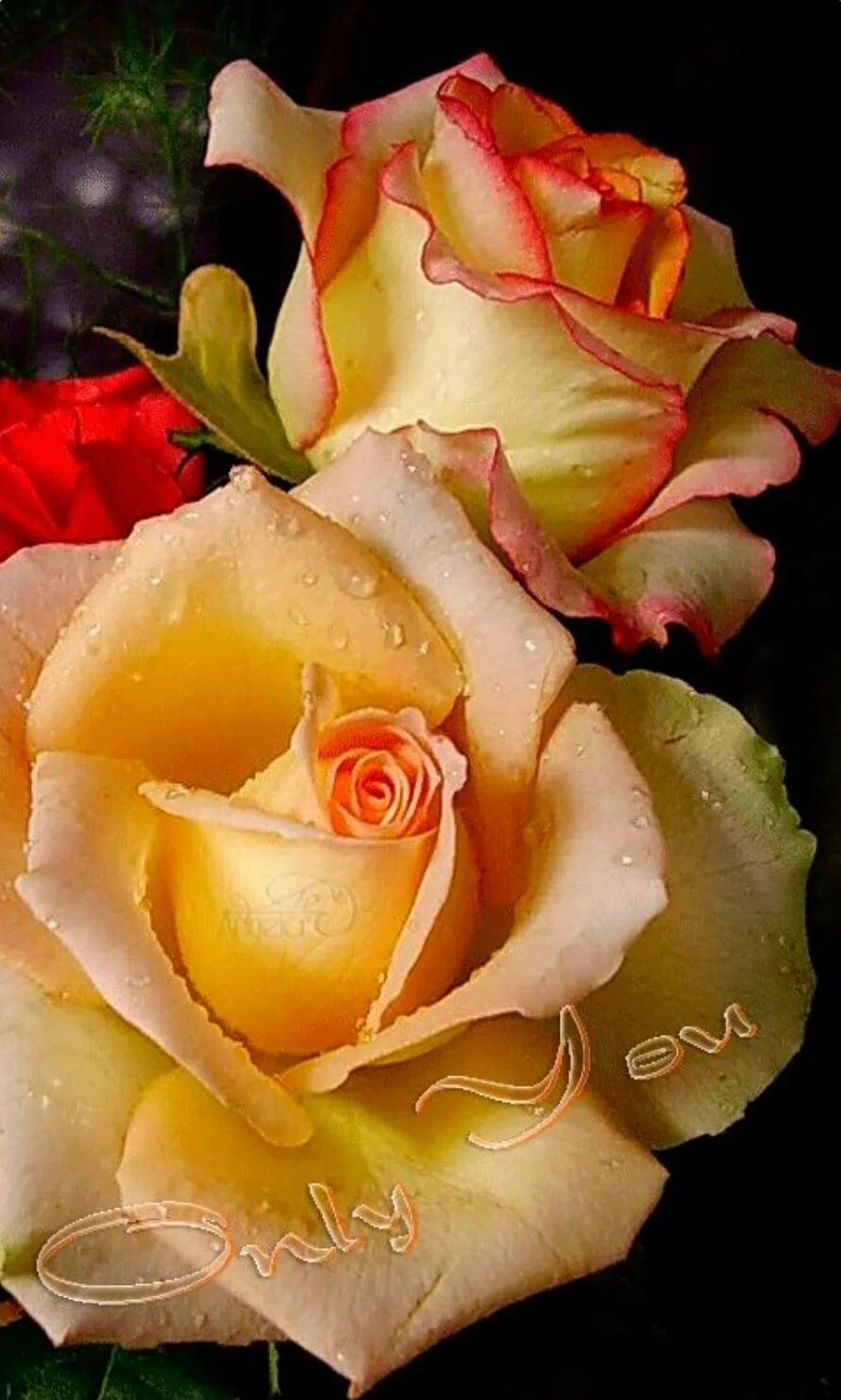 Золотая мерцающая роза анимация фото