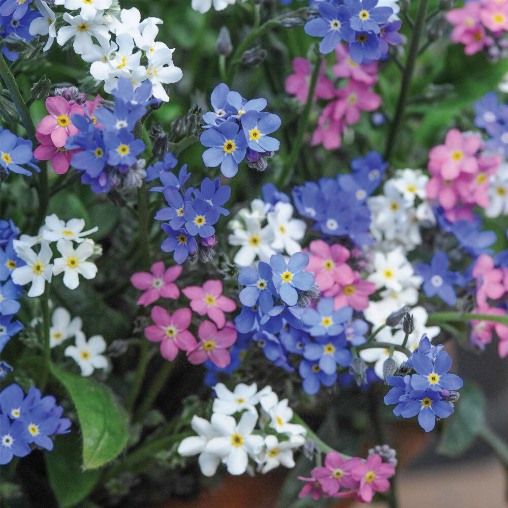 мелкие голубые цветы названия и фото платье
