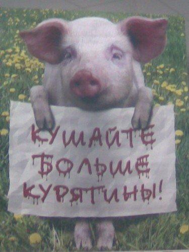 Турецкая картинки, свинья картинка с надписью