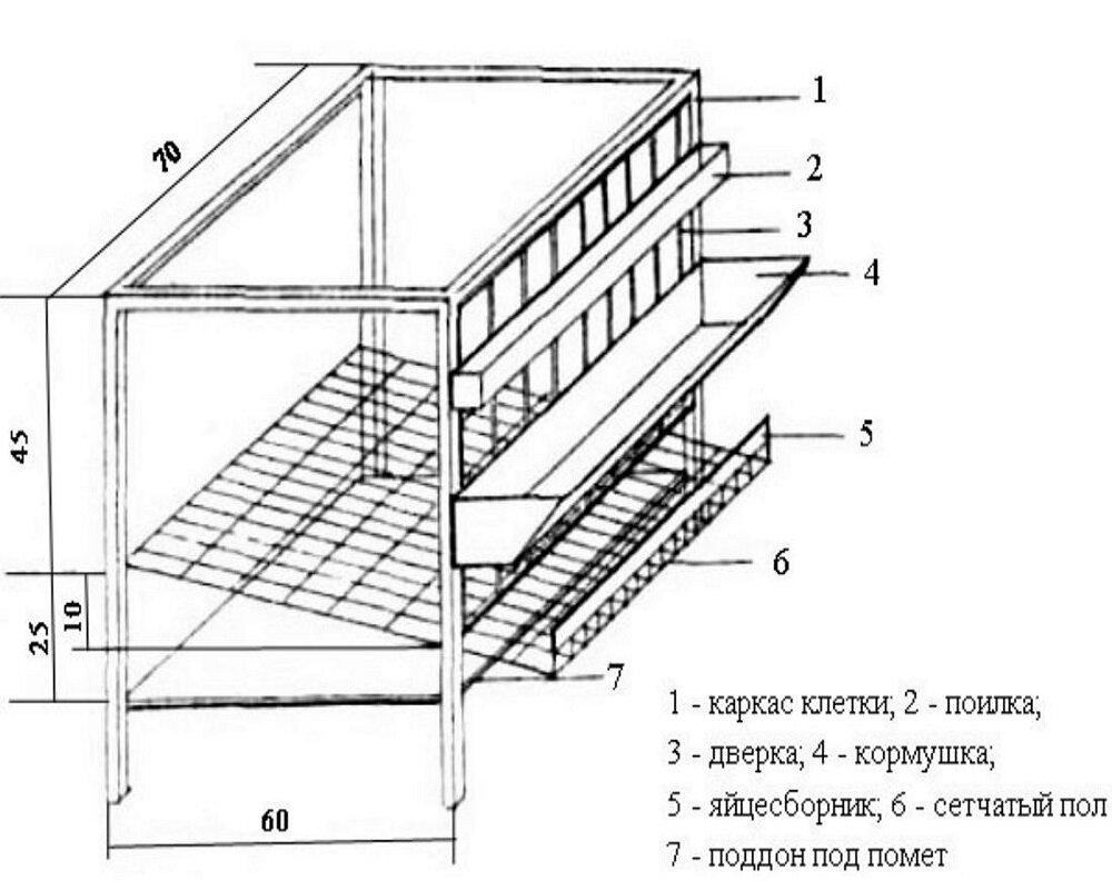 построить курятник своими руками фото схемы домашних условиях можно