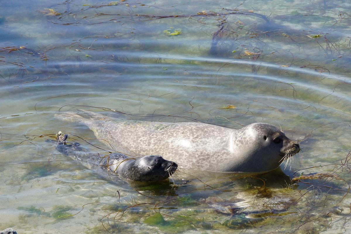 тюлень плавает картинка при стрельбе способы