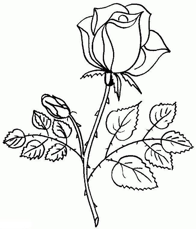 Картинка, роза рисунок для детей