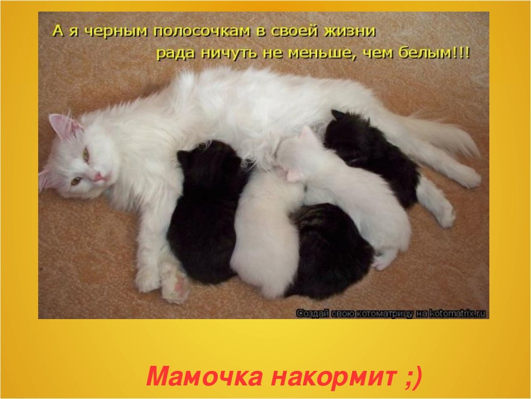 60-летием, картинки про кошек и котят с прикольными надписями