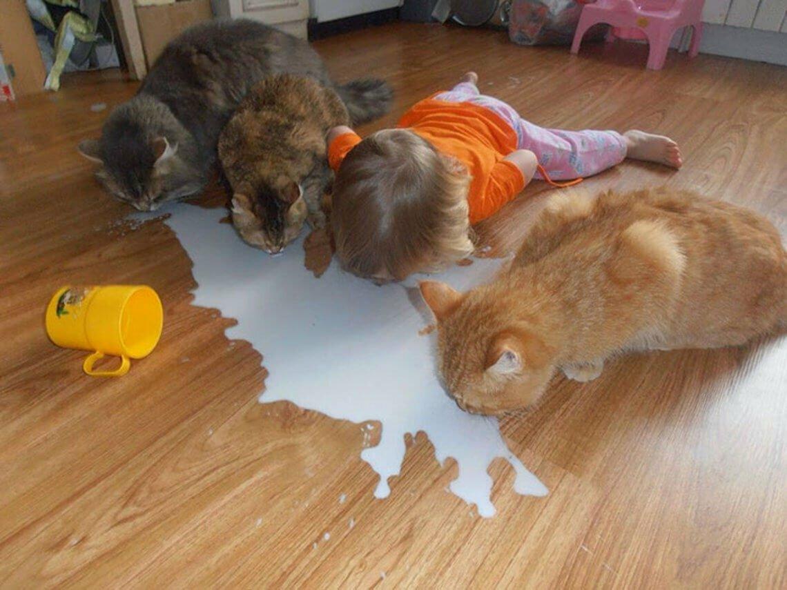 Картинки, смешные картинки про животных для детей до слез