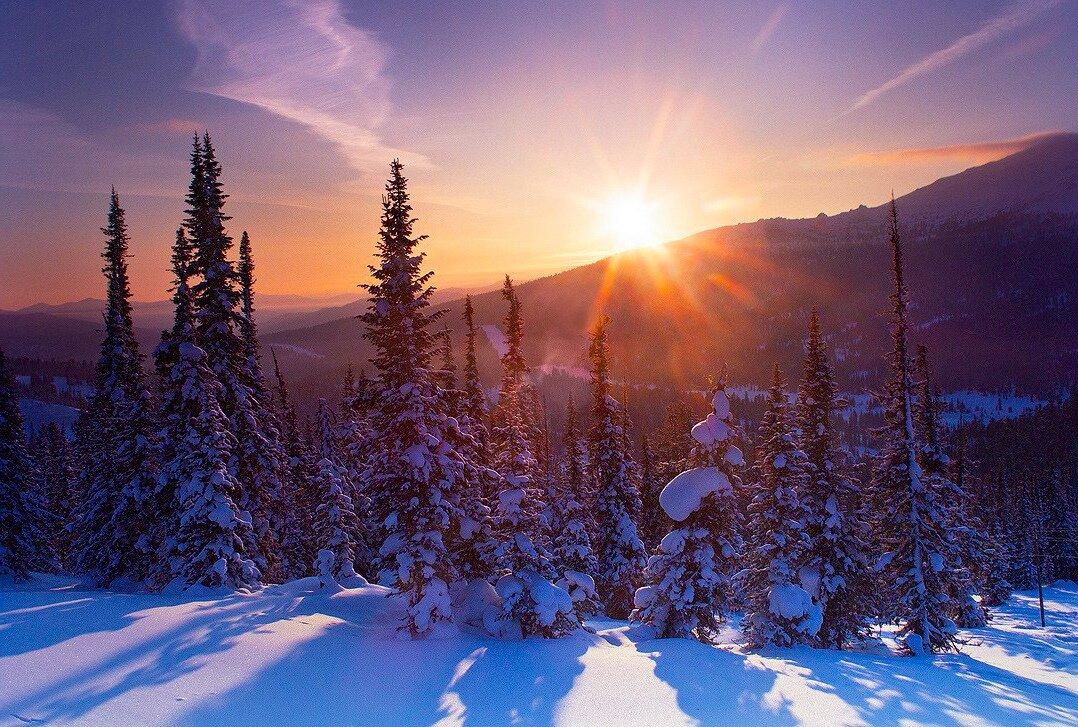 зимняя тайга картинки того