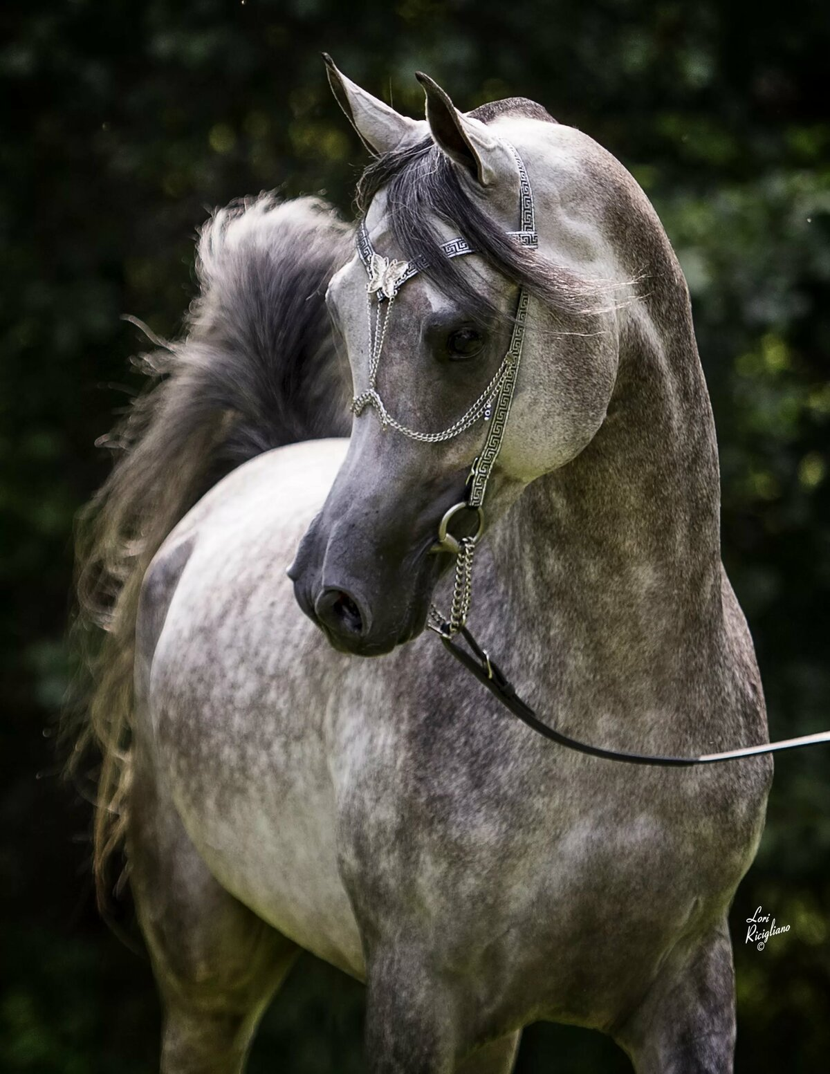 Арабская лошадка картинки