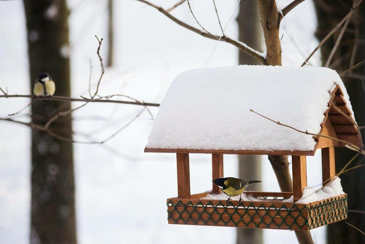 Птицы зимой в кормушке