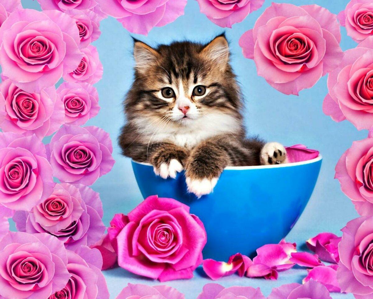 Собаками, открытки розы и кошка