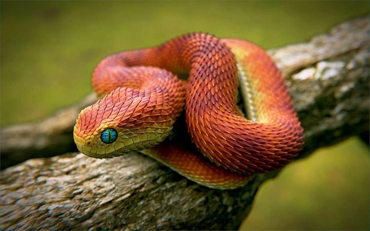 Интересные картинки змей
