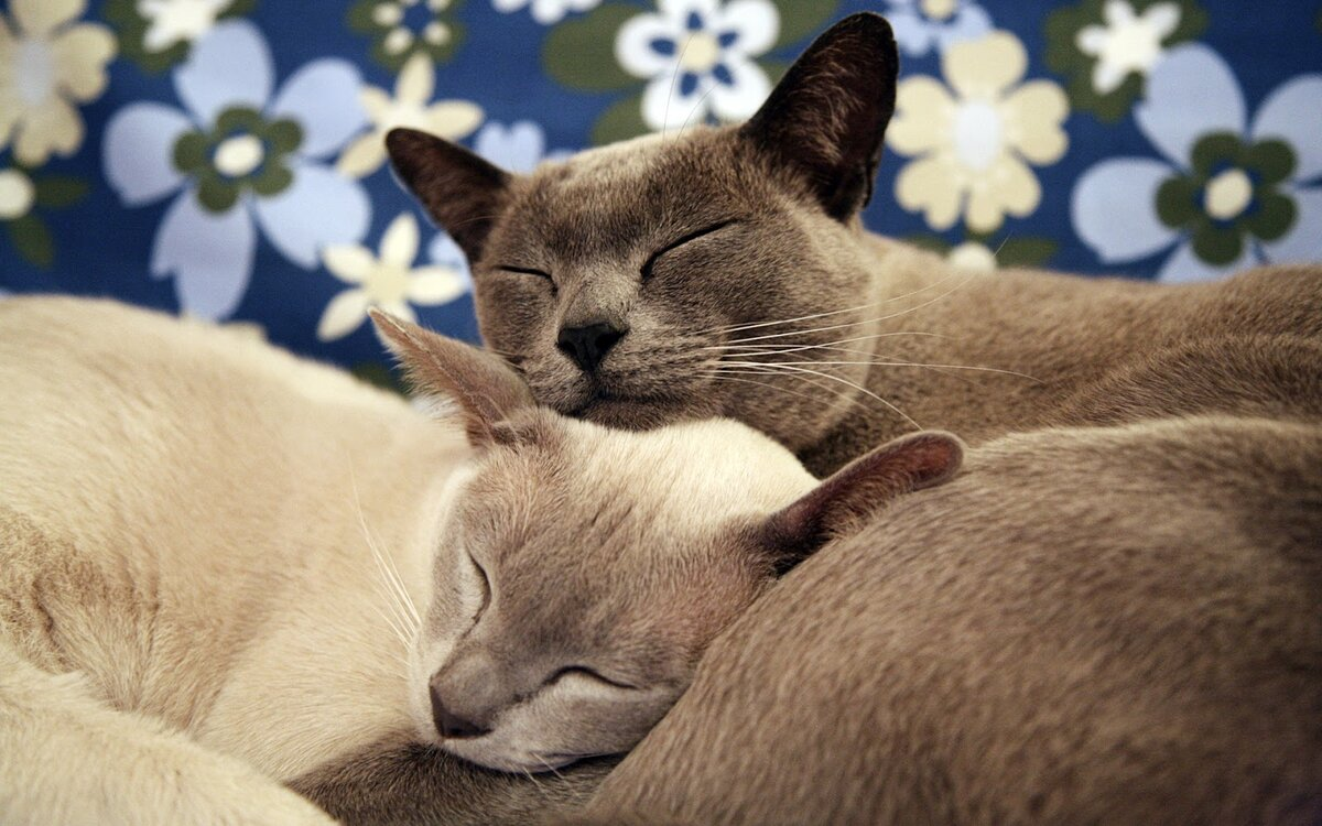 Прикольные картинки с кошками про любовь, картинки душевую кабину