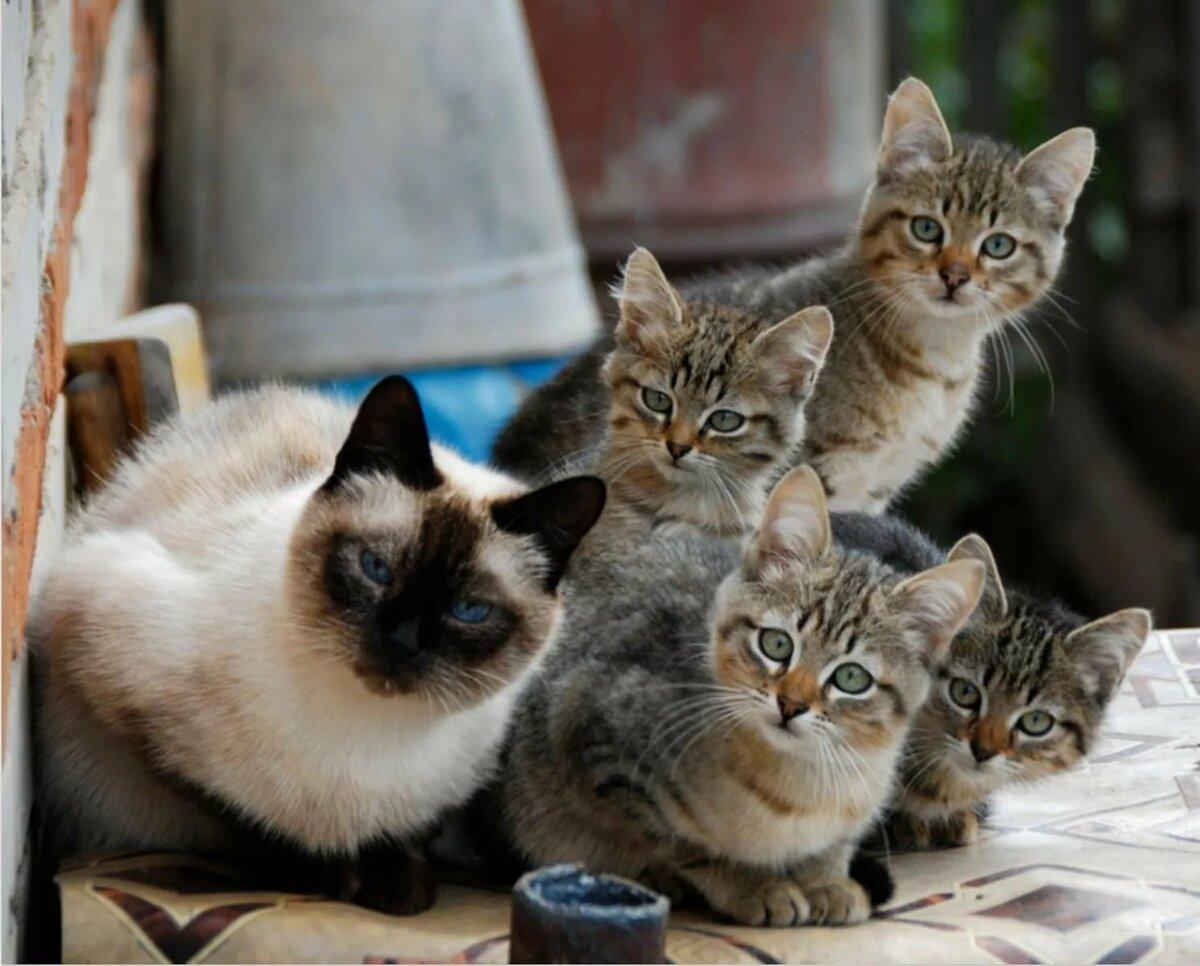 Прикольные и смешные картинки с кошками, днем св.ольги