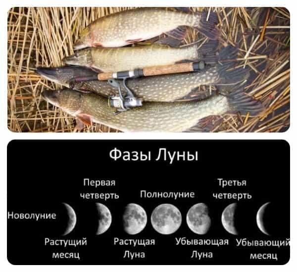 При какой фазе луны лучше клюет щука