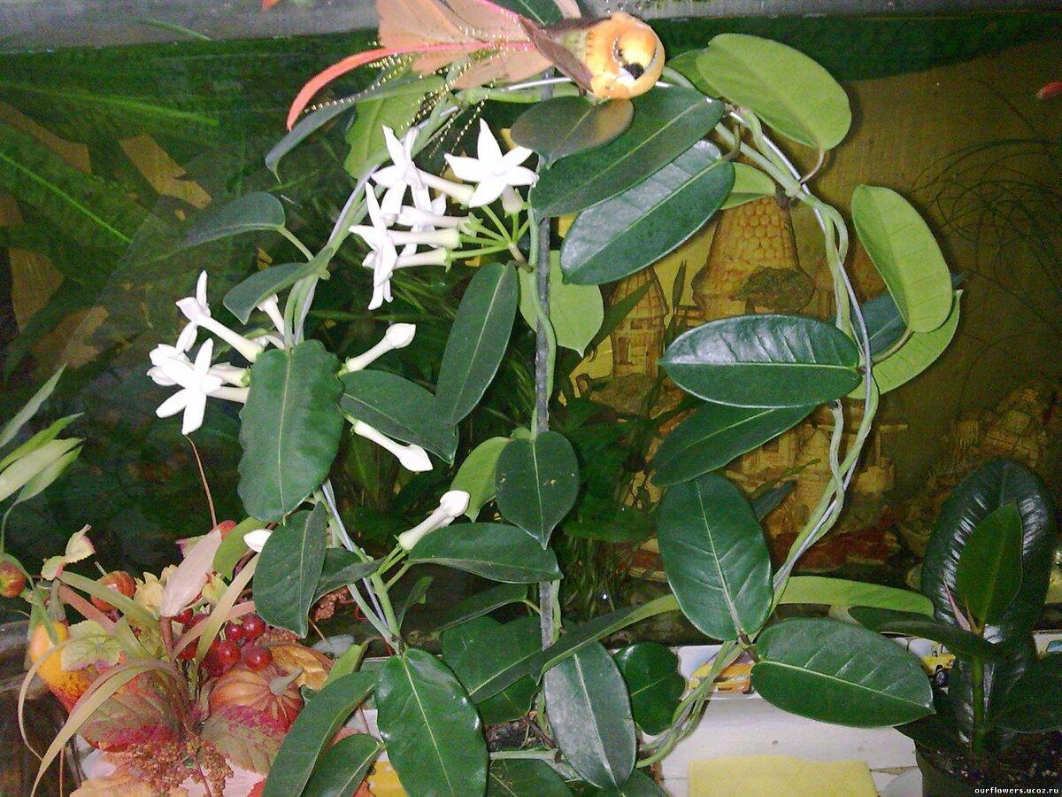 плетущиеся комнатные растения фото с названиями связано тем, что