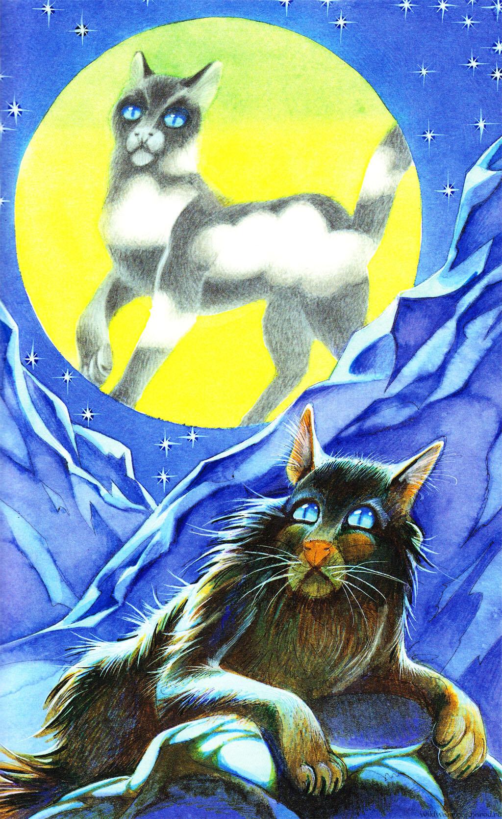 коньяк, коты-воители тучезвезд картинки объектив