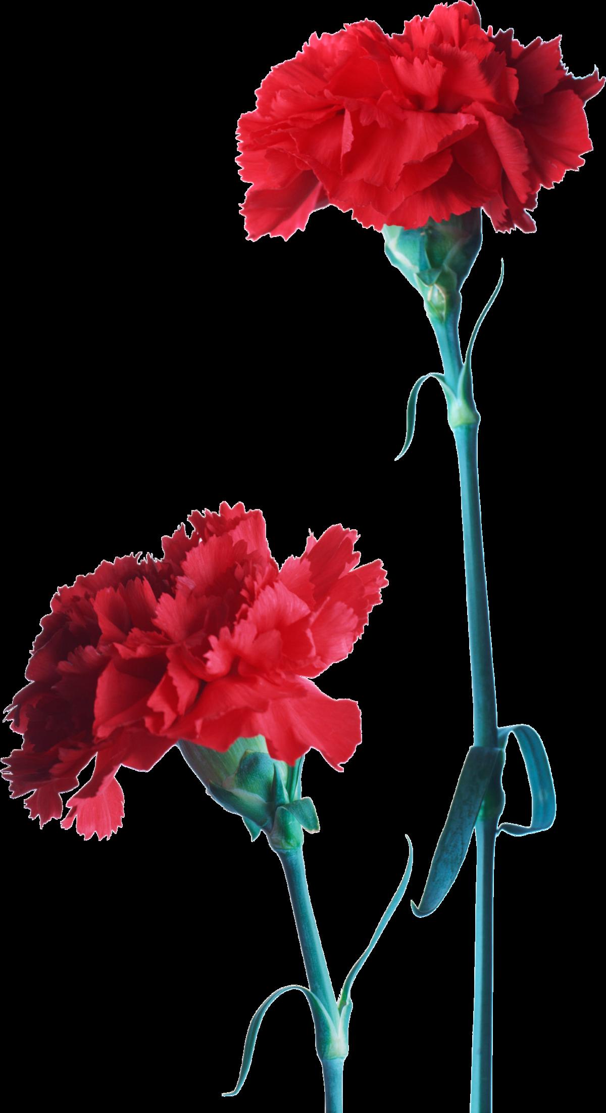 Гифка, два цветка картинки на прозрачном фоне