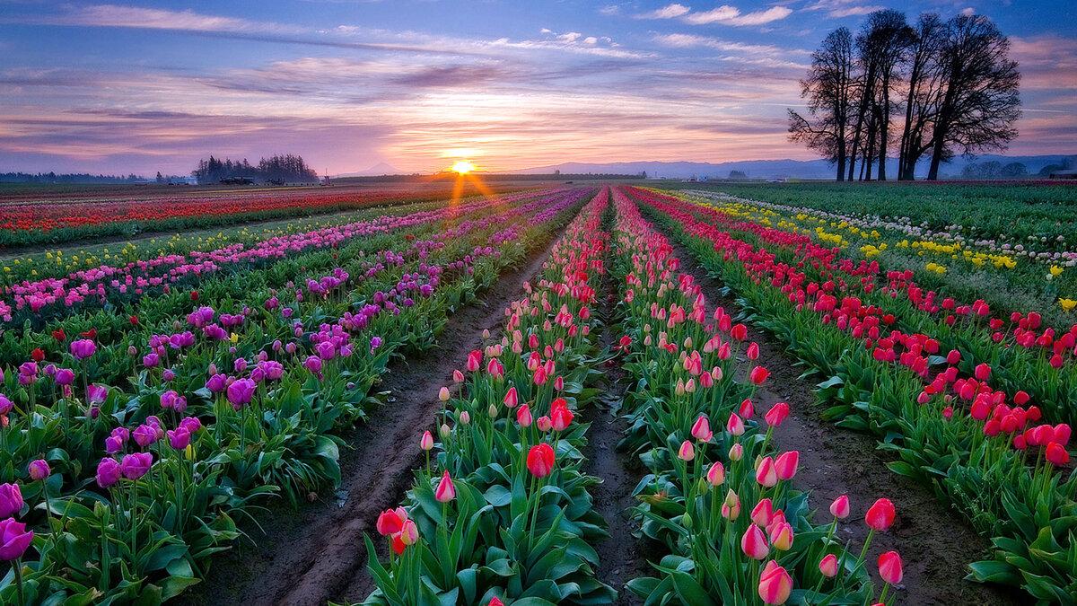 Цветы мира официальный сайт, букет заказать