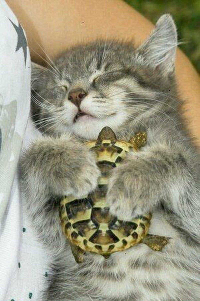 Для настоящих чувств  в природе не может быть никаких помех, даже если один - хищник,а другой - травоядное, большие и маленькие, млекопитающие и земноводные, пушистые и скользкие - все могут дружить друг с другом, несмотря ни на что!