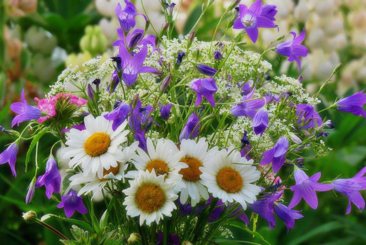 Картинка с днем рождения цветы полевые