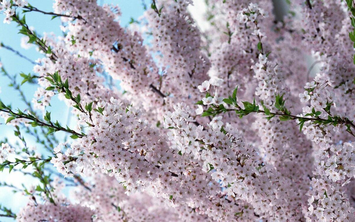 Крутому, картинки весенние с цветами