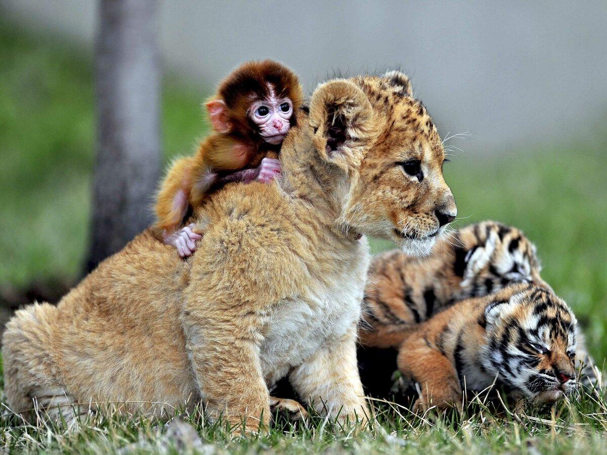 Картинки в виде животных, днем рождения