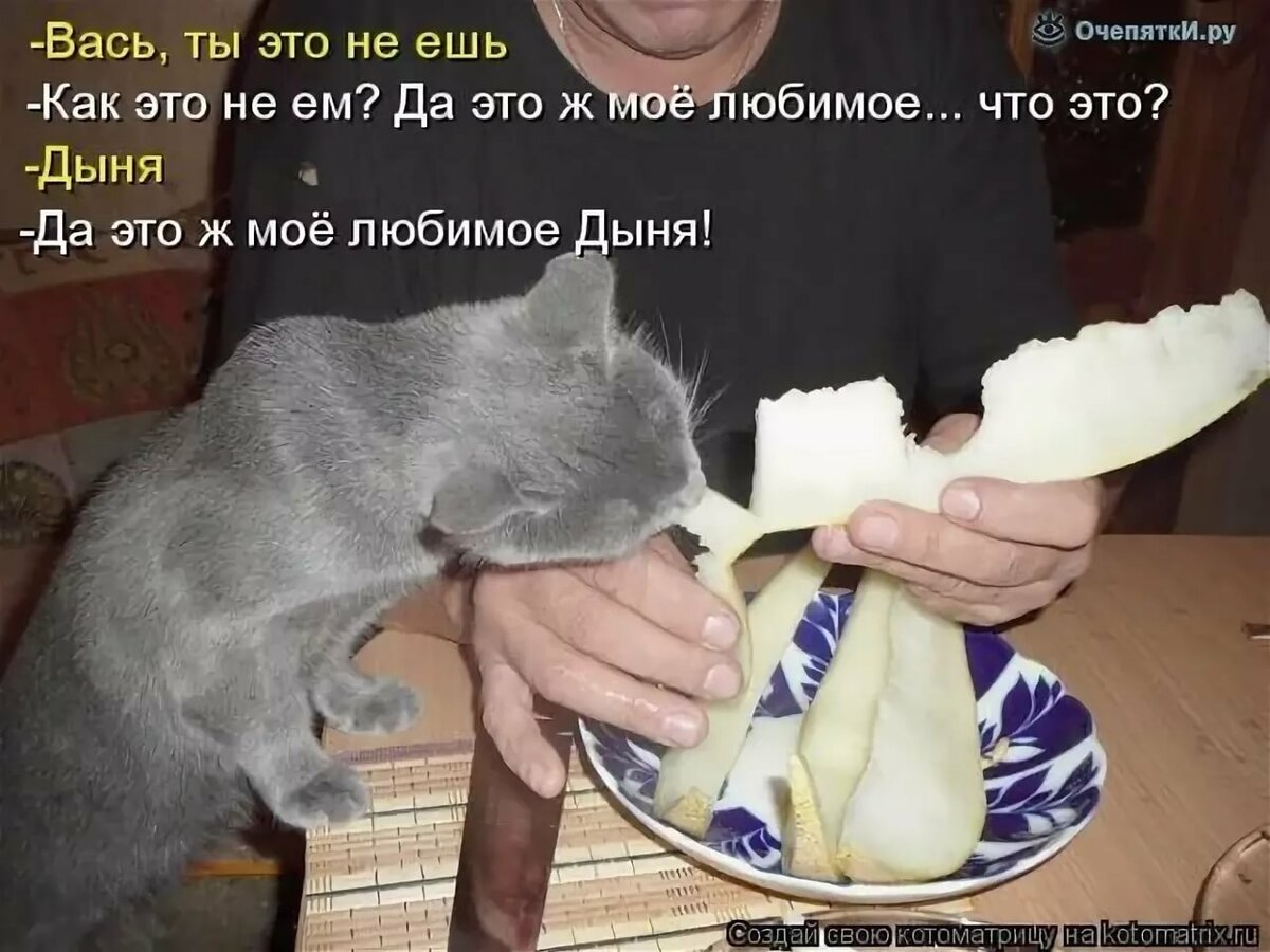 Картинки приколы смешные с надписями про животных до слез смотреть, для открыток