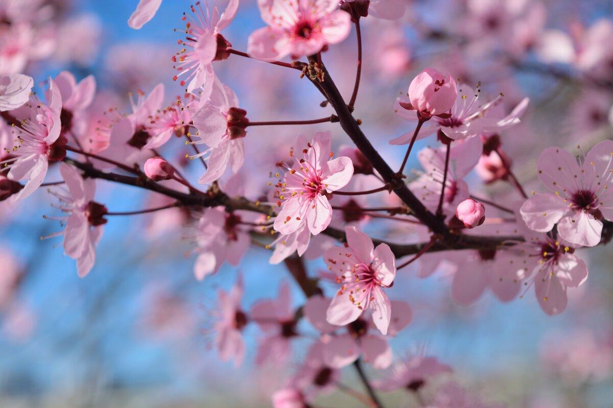 картинки весна время расцветать картинки бореаназ