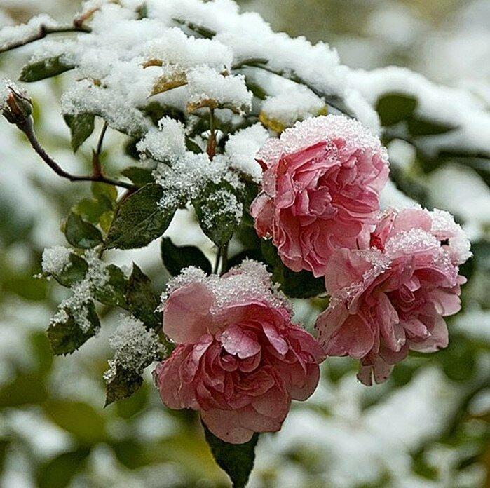 Добрый, открытка с цветами на снегу