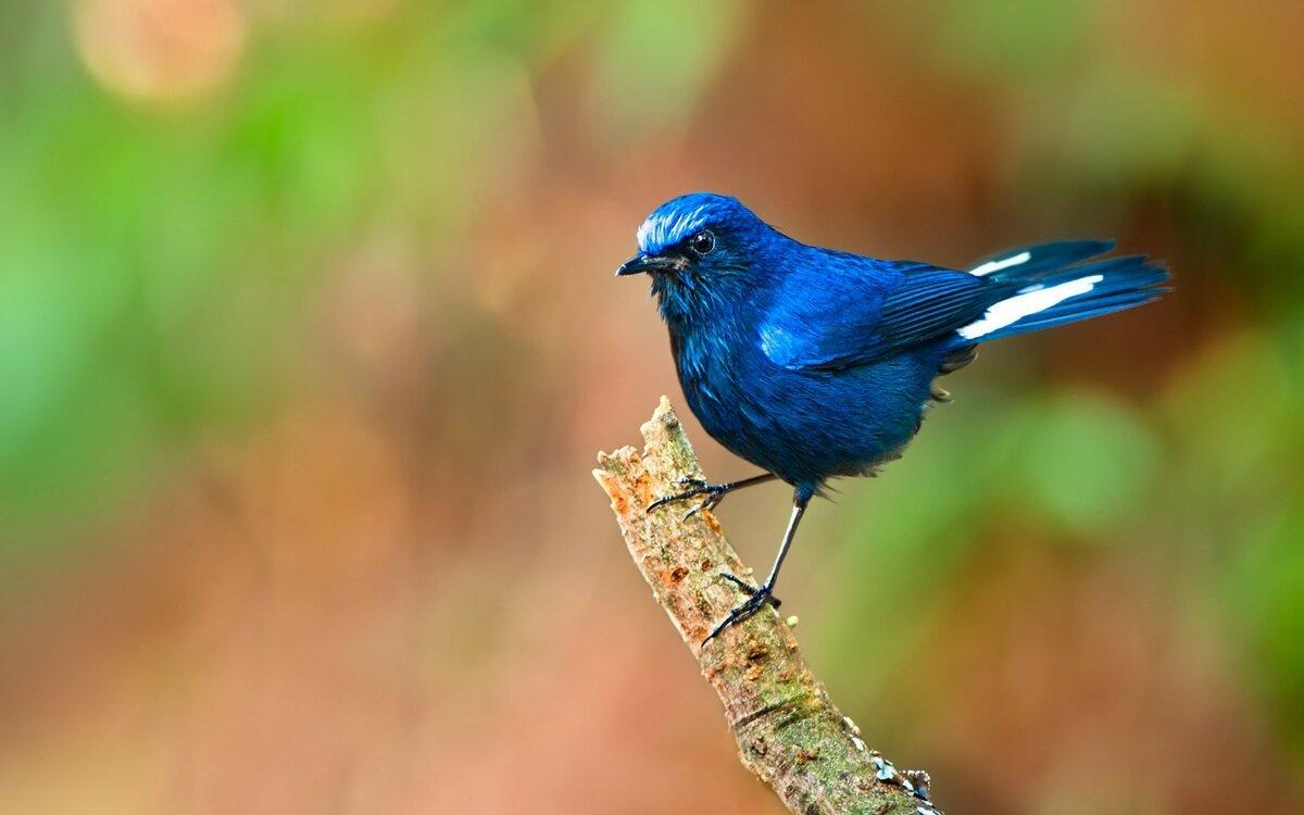 Картинки голубых птиц
