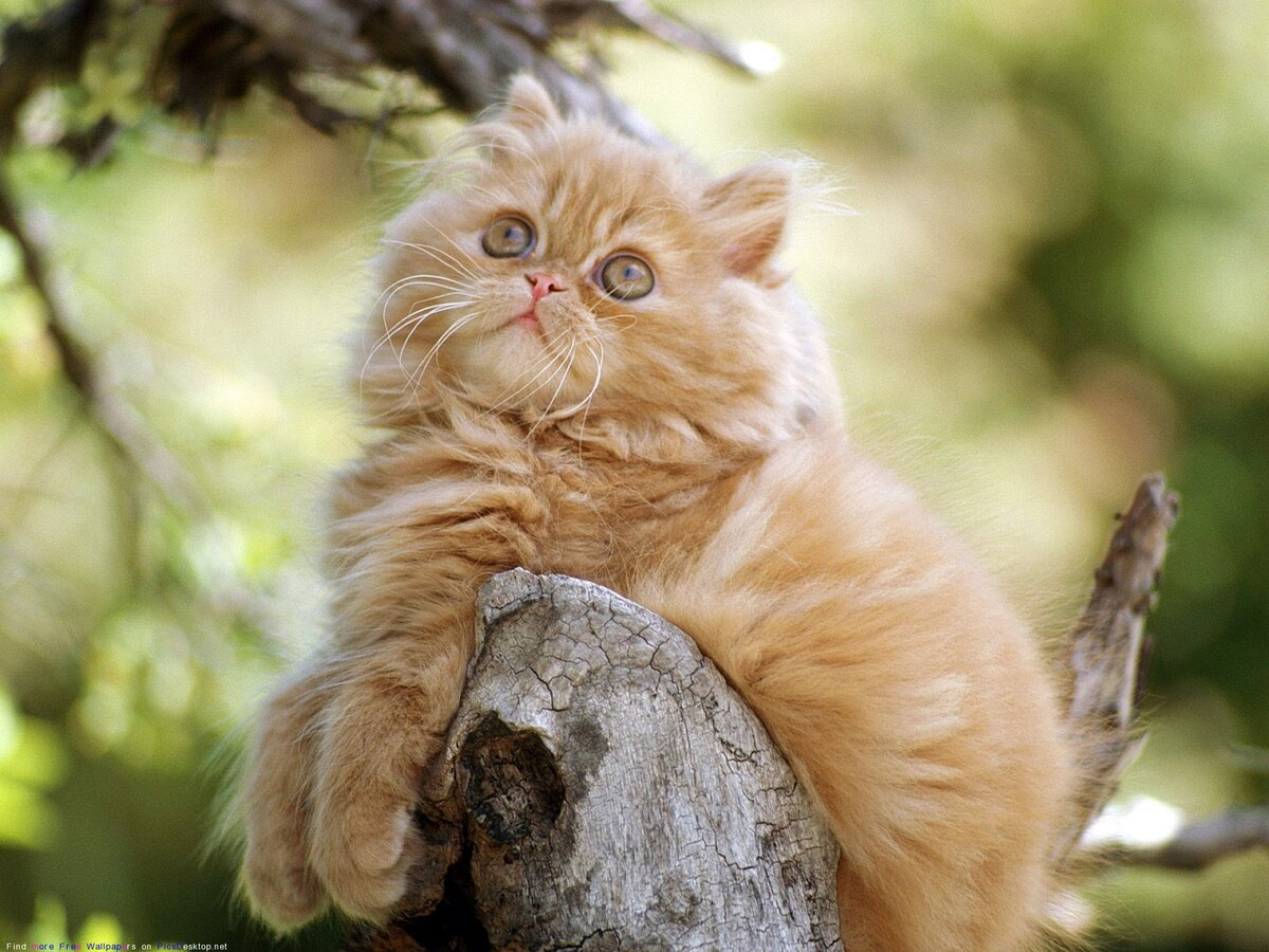 Картинки животных котов, все хорошо