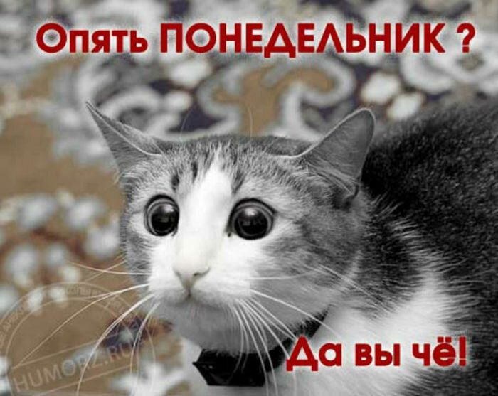 смешные картинки с надписью про понедельник используются