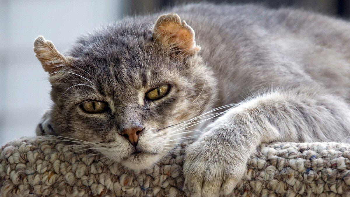 Февраля гифка, кошачьи в картинках