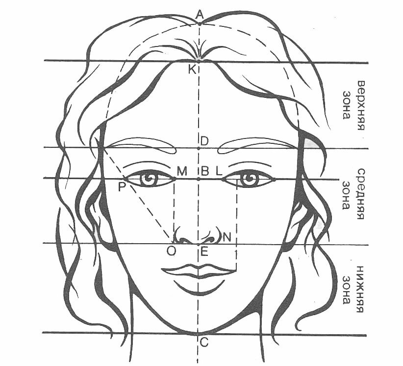 схема лица человека готового проекта типового