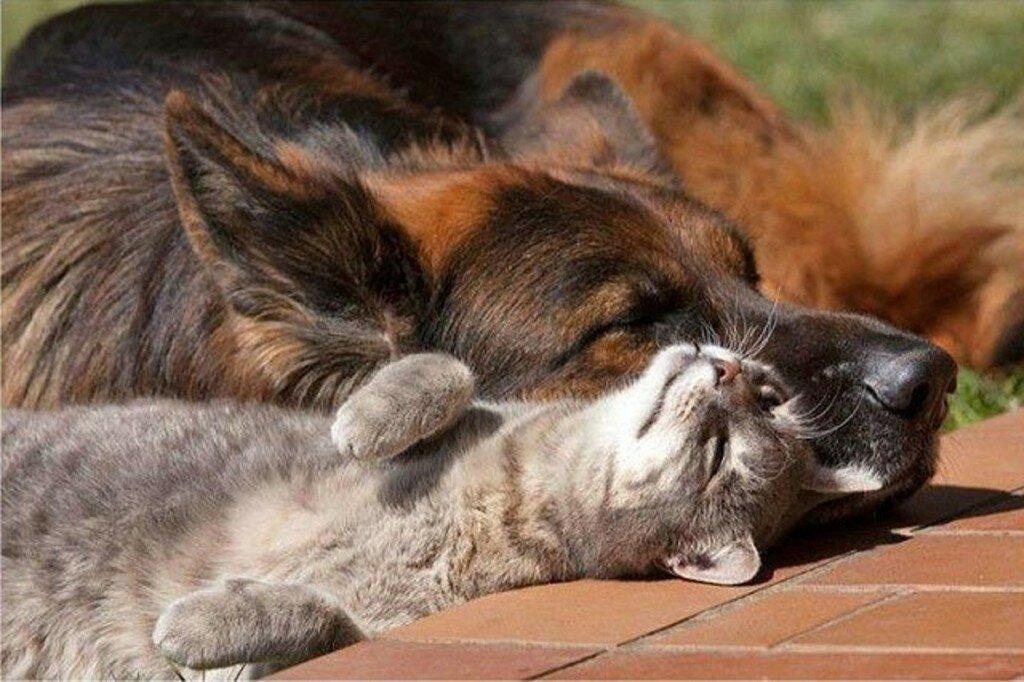 Картинки дружных котов с надписями, анимации днем рождения