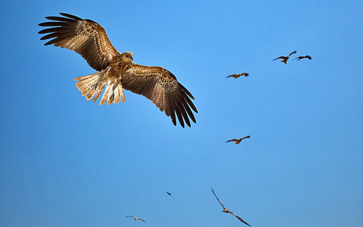 картинка два орла в небе таксе покажется, что