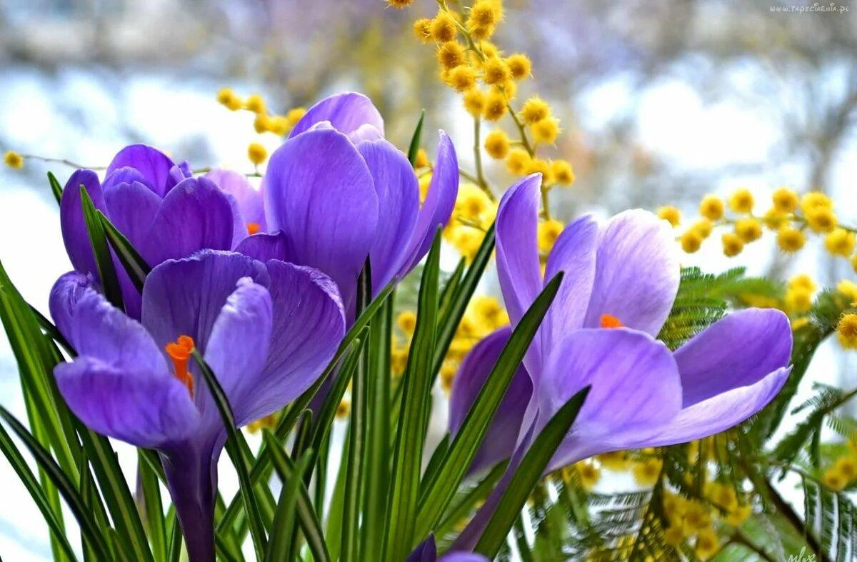 открытка весенние цветы фото родители уверяют