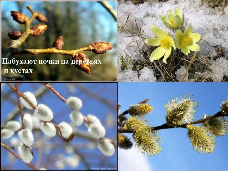 Картинка первые признаки весны